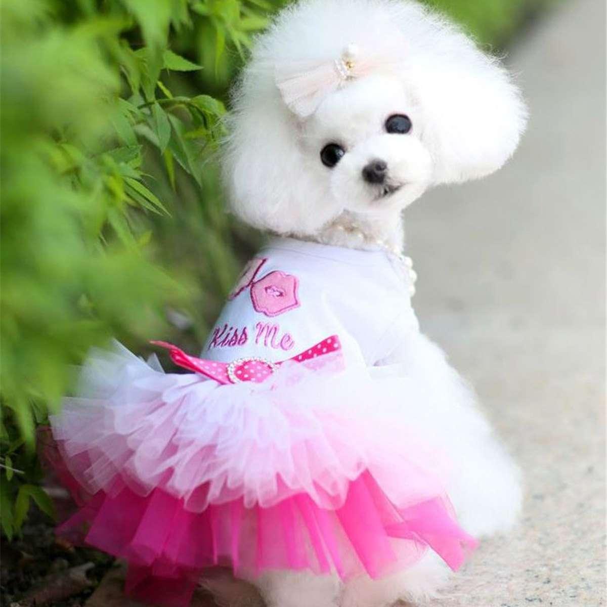 Köpek Tütü Kostüm